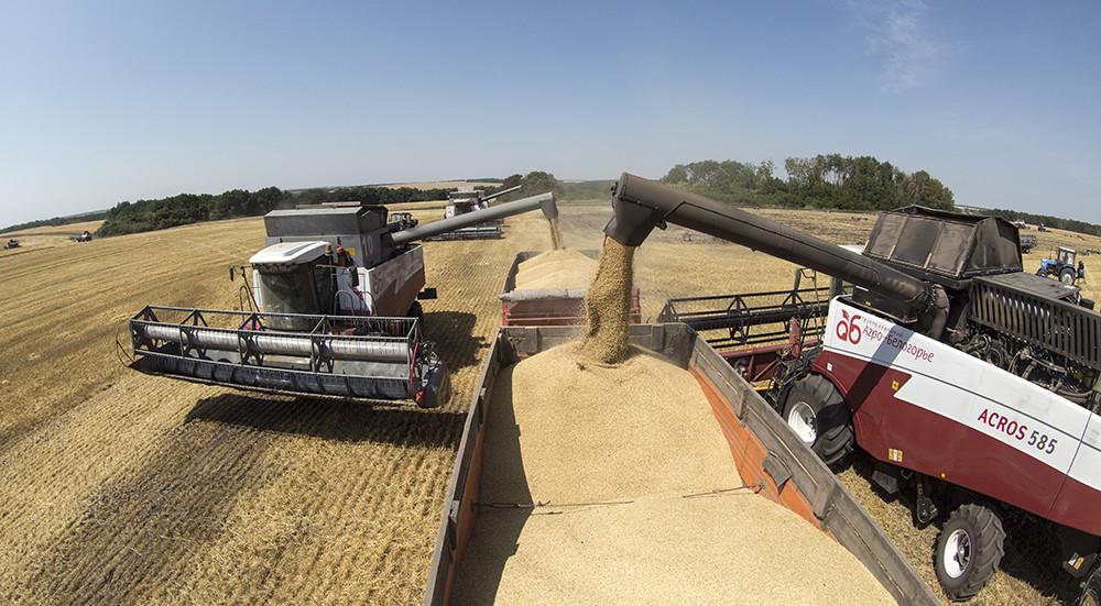 Обогнать США по экспорту пшеницы