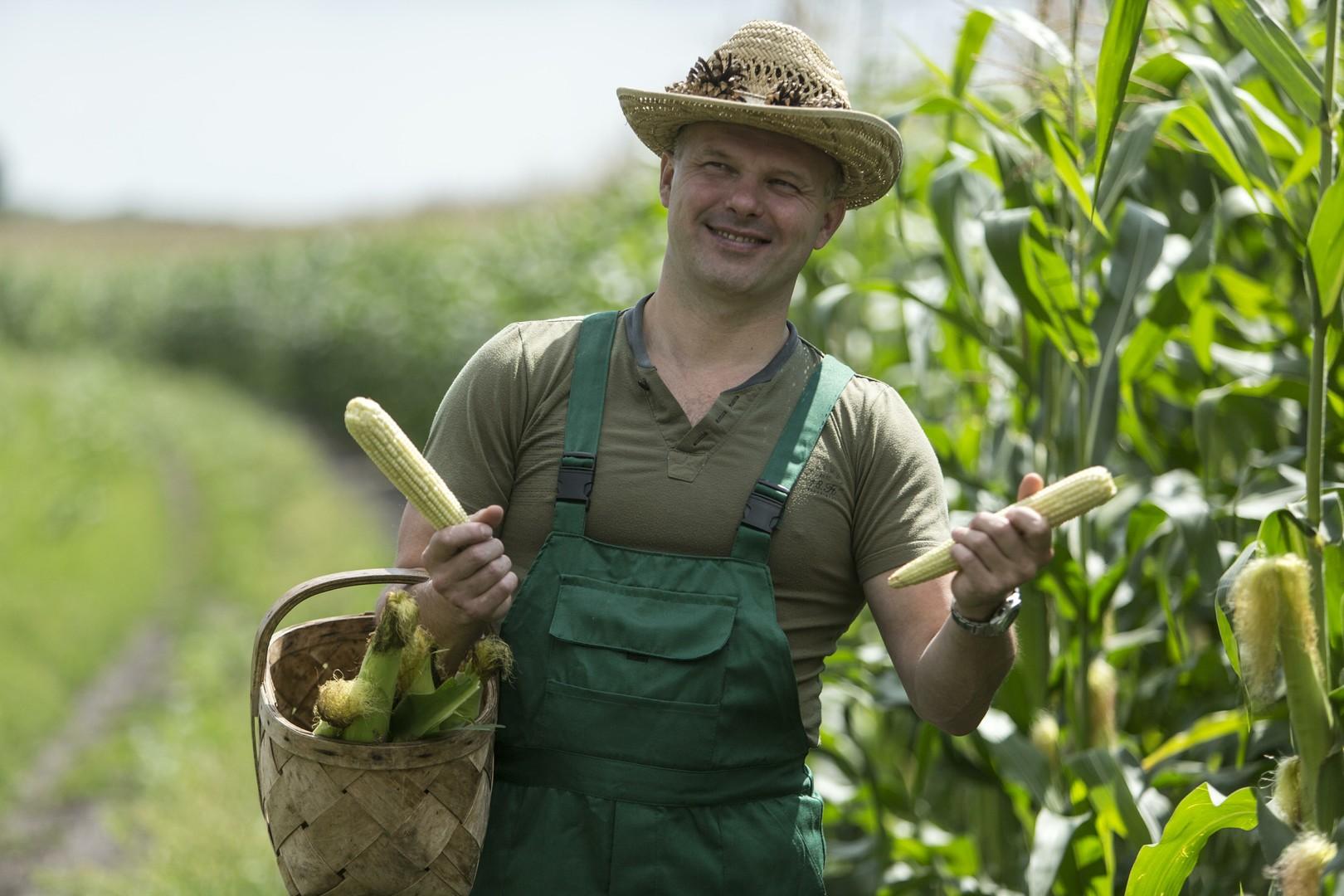 Экспорт кукурузы из России вырастет