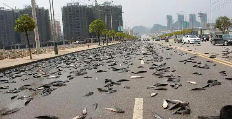 Рыбий дождь