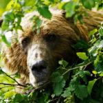 Медведь и люди