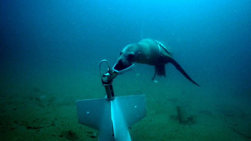 США обучают военному делу тюленей и морских львов