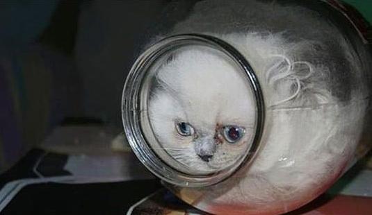 Koty-jeto-zhidkost-9.jpg