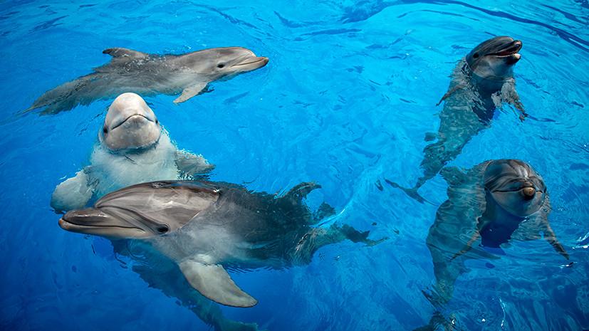 Поисковые дельфины
