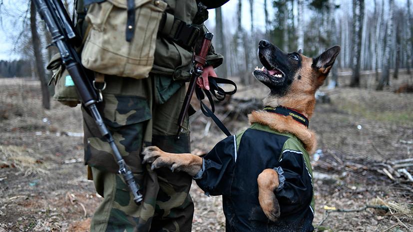 Собаки - истребители танков