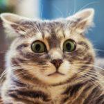Поделить кота через суд